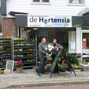 De Hortensia image 1