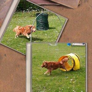 Fun4dogz Hondentraining en Hondenmassage image 3