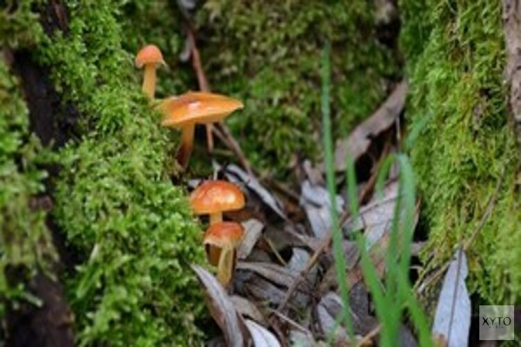 Excursie: Word paddenstoelenexpert