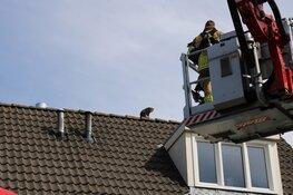 Baasje helpt brandweer met redden kat van dak in Purmerend