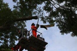 Vallende tak verspert weg in Zuidoostbeemster