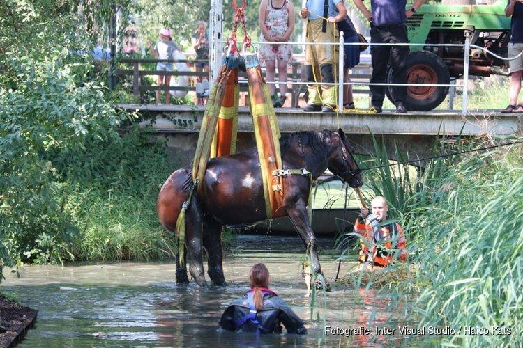 Brandweer uren bezig met paard te water