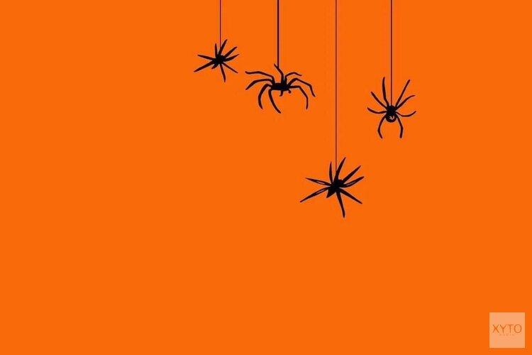 Griezelen met spinnen op Halloween in het Purmerends Museum