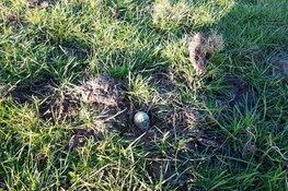 Eerste kievitsei Noord-Holland gevonden op 5 maart 2019